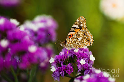 Islamabad Photograph - Butterfly Effect by Syed Aqueel
