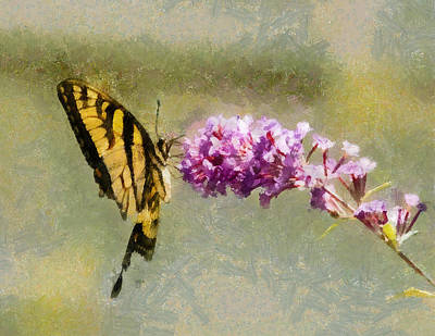 Digital Art - Butterfly Feast by Jim Proctor