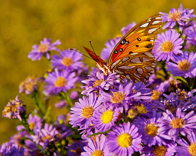 Photograph - Butterfly by Francis Trudeau
