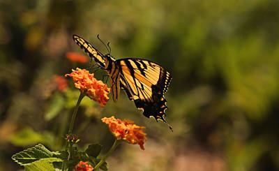 Photograph - Butterfly Garden by Katherine White