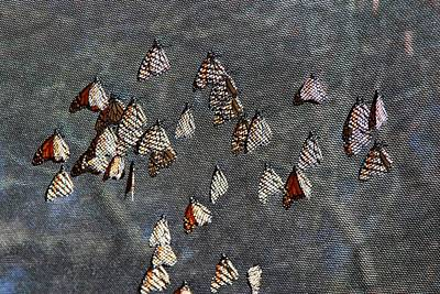 Art Print featuring the photograph Butterfly Gathering by Tam Ryan