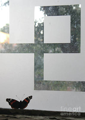 Photograph - Butterfly Geometry  by Alycia Christine