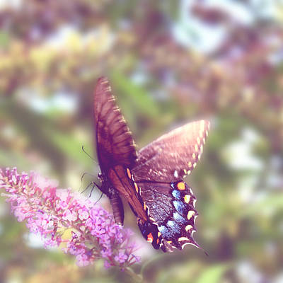 Photograph - Butterfly  by Gray  Artus