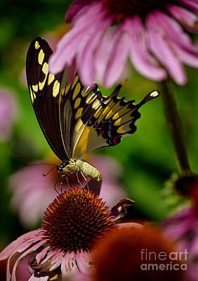 Photograph - Butterfly Heaven by Sue Stefanowicz