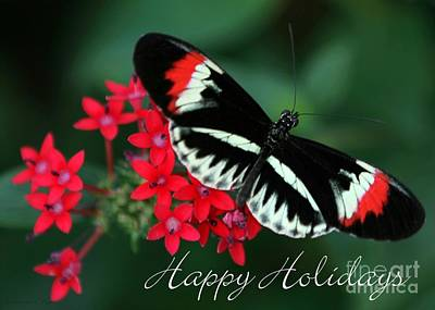Photograph - Butterfly Holiday Card by Sabrina L Ryan