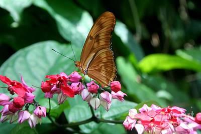Photograph - Butterfly I by Ellen Heaverlo