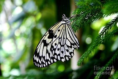Photograph - Butterfly II by Ellen Heaverlo