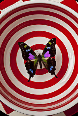 Butterfly In Circle Bowl Art Print by Garry Gay