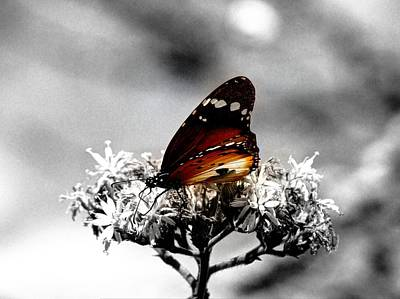 Photograph - Butterfly In Color by David Morefield