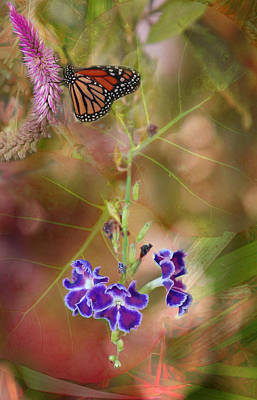 Photograph - Butterfly In Ecstasy by Joseph G Holland