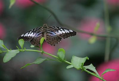 Brookshire Gardens Butterfly House Photograph - Butterfly In Flight by Valia Bradshaw