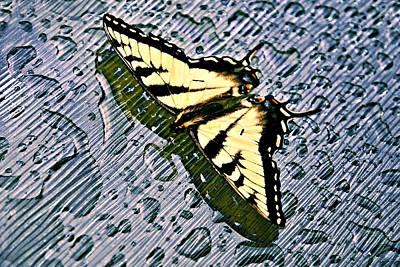 Butterfly In Rain Art Print by Susan Leggett