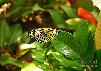 Butterfly In Yellow And Black Art Print by J Jaiam