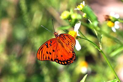 Photograph - Butterfly by Ira Runyan