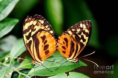 Photograph - Butterfly Iv by Ellen Heaverlo
