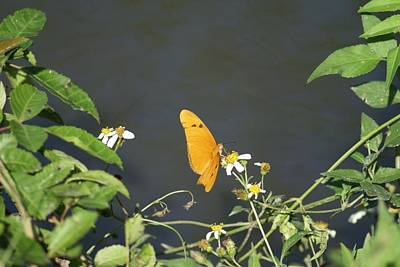 Art Print featuring the photograph Butterfly by Jerry Cahill