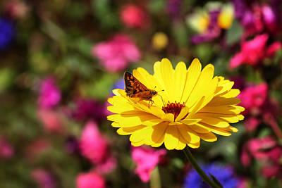 Butterfly Kissing Yellow Wildflower  Art Print