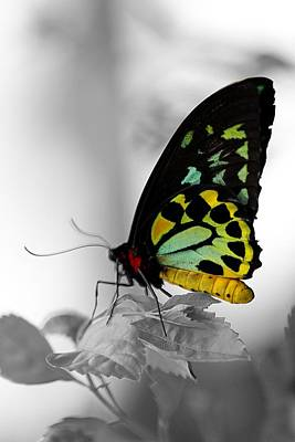Photograph - Butterfly Leaves by Elizabeth Winter