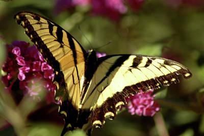 Photograph - Butterfly by LeeAnn McLaneGoetz McLaneGoetzStudioLLCcom