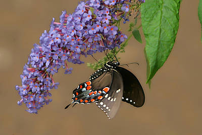 Butterfly Looking Up Art Print by Daamonturne