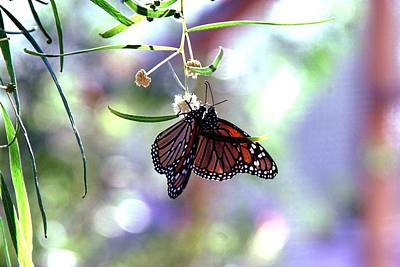 Photograph - Butterfly Meet-up by Tam Ryan