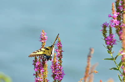 Butterfly Morning Art Print by Bill Cannon