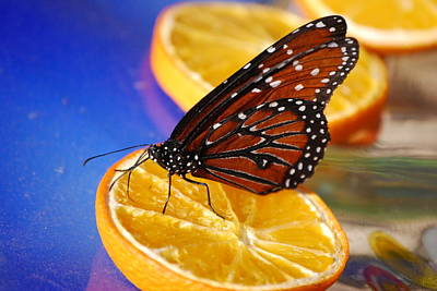 Art Print featuring the photograph Butterfly Nectar by Tam Ryan