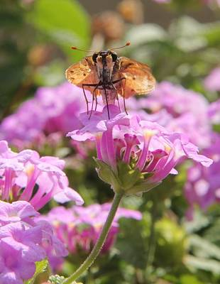 Photograph - Butterfly On A Flower by Scott Brown