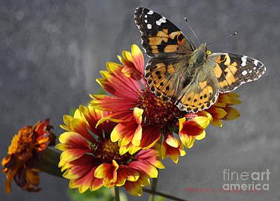 Art Print featuring the photograph Butterfly On A Gaillardia by Verana Stark