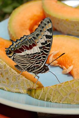 Butterfly On Cantaloupe Art Print by Eva Kaufman