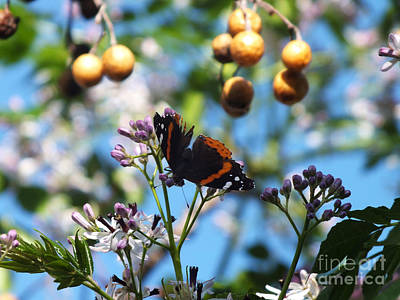 Photograph - Butterfly On Chinaberry Tree by Tammy Herrin