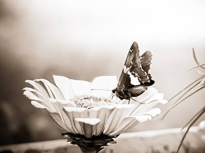 Mixed Media - Butterfly On Flower Bw by Connie Dye