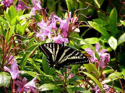 Butterfly On Flowers Art Print by Mark Caldwell