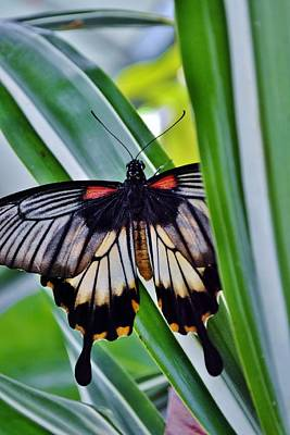 Art Print featuring the photograph Butterfly On Leaf by Werner Lehmann