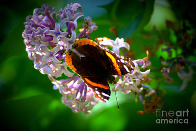 Butterfly On Lilac Art Print