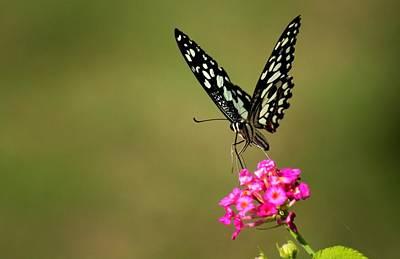 Art Print featuring the digital art Butterfly On Pink Flower  by Ramabhadran Thirupattur