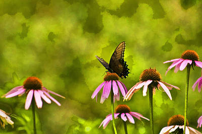 Pink Flower Photograph - Butterfly On Pink Flower by Scott Wood