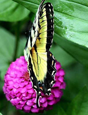 Butterfly On Pink Print by Susan Leggett
