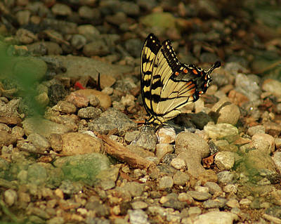 Photograph - Butterfly On The Rocks by Margie Avellino