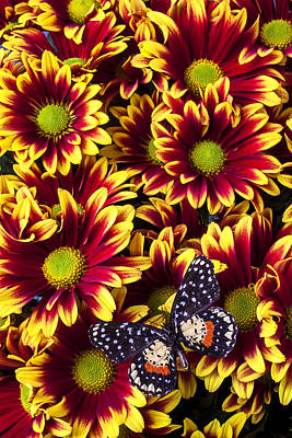 Speckled Photograph - Butterfly On Yellow Red Daises  by Garry Gay