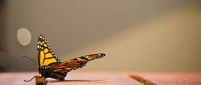 Butterfly Art Print by Paul Robb