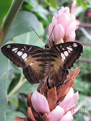 Butterfly Pavilion1 Art Print