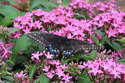 Photograph - Butterfly Pinkflowers by Jerry Bunger