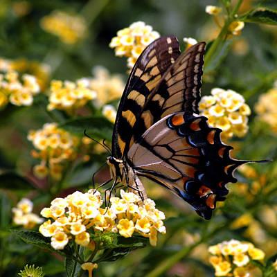 Photograph - Butterfly Poise by LeeAnn McLaneGoetz McLaneGoetzStudioLLCcom