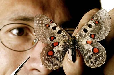 Butterfly Preparation Art Print by Mauro Fermariello