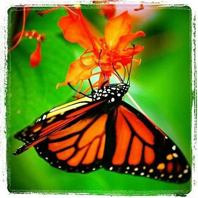 Pretty Wall Art - Photograph - #butterfly #pretty #colorful by Mandy Shupp