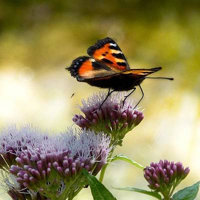 Colourful Wall Art - Photograph - Butterfly by Rachel Williams