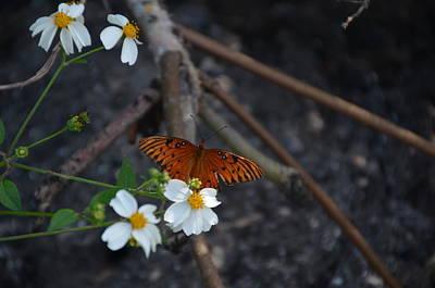 Photograph - Butterfly  by Randy J Heath