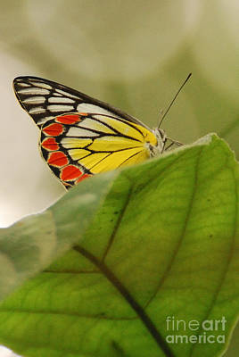 Art Print featuring the photograph Butterfly Resting by Fotosas Photography