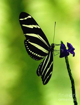 Photograph - Butterfly by Ronald Grogan
